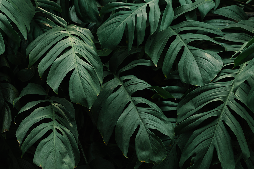 https://joelleitte.com/wp-content/uploads/2018/01/tropical-green-leaves-background.png